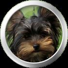 Yorkshire Terrier Theme icon