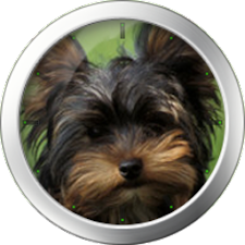 Yorkshire Terrier Theme