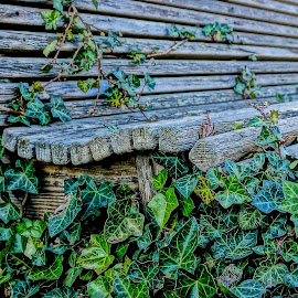 Ivy Covered by Barbara Brock - Artistic Objects Furniture ( wood bench, decaying bench, ivy, old bench )