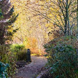 Autumn park trail by Cory Bohnenkamp - City,  Street & Park  City Parks ( colour, park, autumn, path, walk, city )