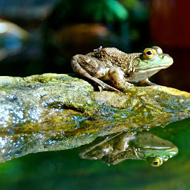 Lil Walter by Michael Crawley - Animals Amphibians