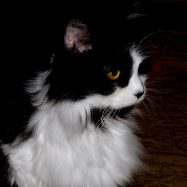 Kitty Profile by Karen Hardman - Animals - Cats Portraits