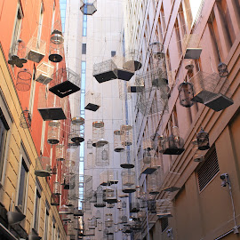 Birdcages by Helen Beggs - Buildings & Architecture Architectural Detail