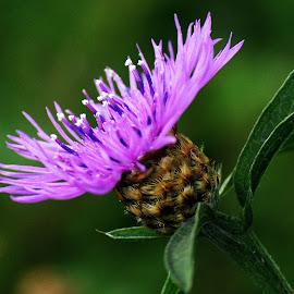 Purple by Sue Duq - Novices Only Macro ( plant, nature, purple, landscape, flower )