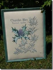 08.08 - Chardon bleu