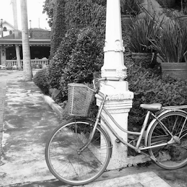 Loner by Francis Florendo - Transportation Bicycles