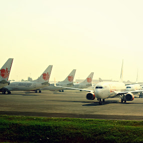 Red Lion Park by Daniel Pasaribu - Transportation Airplanes ( parking, lion,  )
