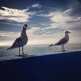 Seamore Seagul by Elaine Alberts - Instagram & Mobile iPhone
