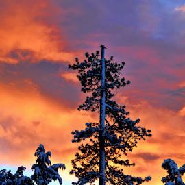 Child Angel Cloud  by Janet Aguila Krause - Landscapes Cloud Formations ( angel, big bear, cloud, sunrise, big bear lake )