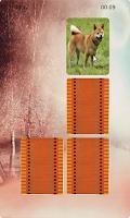 Screenshot of Dogs Matching