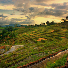 Karamabura by Erwan Setyawan - Landscapes Prairies, Meadows & Fields