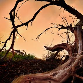 cantigi by Raung Binaia - Nature Up Close Trees & Bushes ( indonesia, deadwood, java )