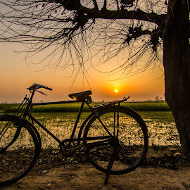 Pedal Power by Avanish Dureha - Transportation Bicycles ( rural india, incredible_india, punjab, sunset, dureha@gmail.com, avanish dureha, bicycle )