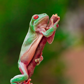 Let Me Pray oh Lord..... by Vincent Sinaga - Animals Amphibians