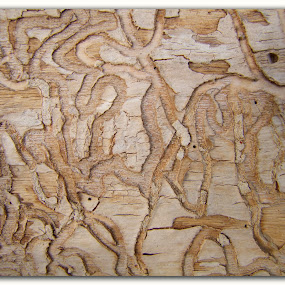 Paths in Natural Wood by Christine Weaver-Cimala - Nature Up Close Other Natural Objects ( path, nature, landscape )