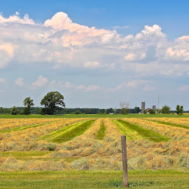 Hay rows in field. by Kathy Suttles - Landscapes Prairies, Meadows & Fields