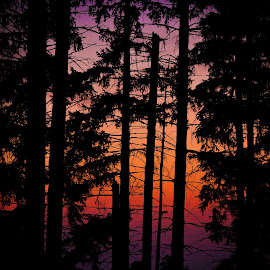 Sundown Behind the Pines by Gary Hanson - Digital Art Things ( sunset colorful;, pines, tree line, sunset, suinset, nightfall, darkness, branches )