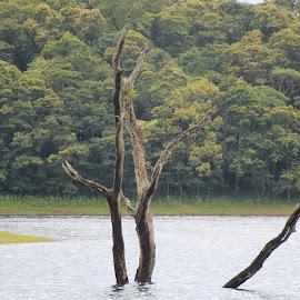 Lake by Ponprasath Vairavanathan - Nature Up Close Water