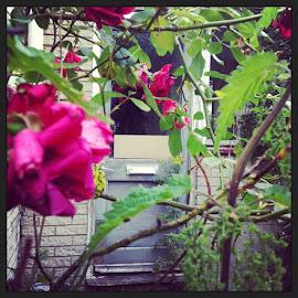 #rose #door #derelict #secret #garden by Kayleigh Hockham - Buildings & Architecture Homes