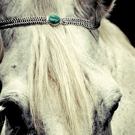 by Kelcey Roberts - Animals Horses ( , object, artistic, jewelry )