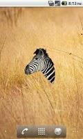 Screenshot of Zebra Head Sticker