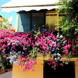 Flower lover by Claudiu Petrisor - Buildings & Architecture Homes ( colors, floers, sea, summer, beach )