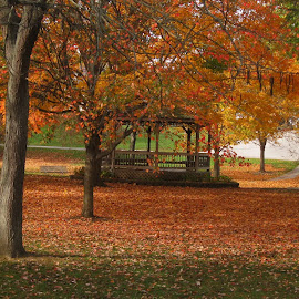 Fall in the park by Anne Mangen - Nature Up Close Trees & Bushes (  )