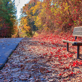 Bench by Carol Plummer - City,  Street & Park  City Parks ( bench, park, autumn, leaves, city,  )