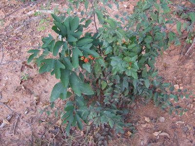 AlabamaPlants9.jpg
