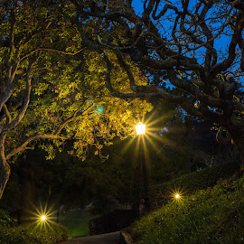 Wellington Botanical Garden by Andrew Ooi - City,  Street & Park  City Parks