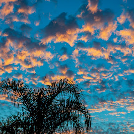 by Tim Mikolajczyk - Landscapes Sunsets & Sunrises ( clouds, san diego, palm tree, colorful, sunset )
