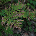 Oak Fern (By J.Michael Sanders)