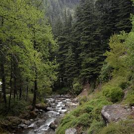 Jibhi Himanchal by Rakesh Syal - Landscapes Mountains & Hills