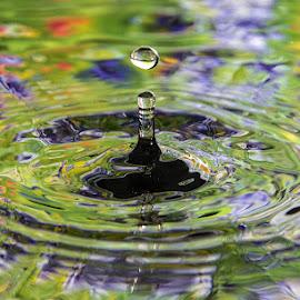 by Amy Vaughn - Nature Up Close Water ( water, splash, waterdrop, droplet, drop,  )