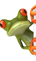 Screenshot of Cartoon Frog Live Wallpaper