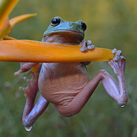 #2 by Yadi Setiadi - Animals Amphibians
