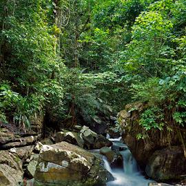 alam kalimantan by Yuares Namakku - Landscapes Forests ( bengkayang )