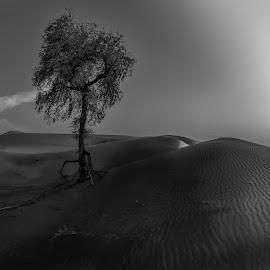 by Khalid Abdullah - Landscapes Deserts