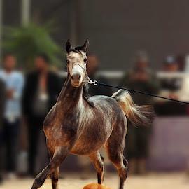 by على القرقورى - Animals Horses