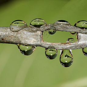 by Aroon  Kalandy - Nature Up Close Natural Waterdrops