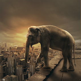 Suicide by Steven Chu - Digital Art Animals