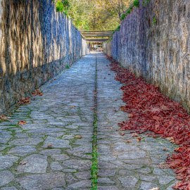 Maaras by Stratos Lales - City,  Street & Park  Historic Districts ( red, path, trees, leaves, straight )