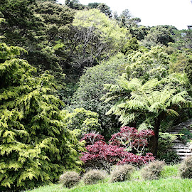 Wellington Pathway by Bonnie Davidson - Landscapes Travel ( pathway, bushes, green, plants, path, trees, travel, wellington, landscape, garden, new zealand, nature )