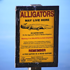 Don't feed the alligators by Wendy Purdy - City,  Street & Park  Neighborhoods ( alligators habitat feed scary waters low country )