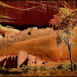 White House Ruin by Fred Coleman - Landscapes Travel ( navajo, cliff dwellings, national monument, chinle, reservation, arizona, canyon, ruins, canyon de chelly, anasazi,  )