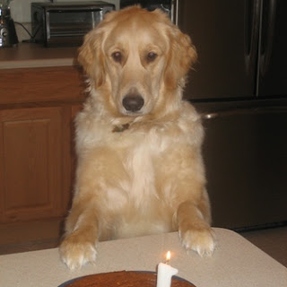 Peanut Butter Banana Cake for Dogs