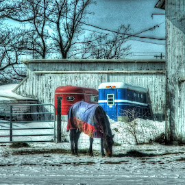 Eating Alone by Judy Soper - Animals Horses ( blanket, barn, hay, horse, sun )