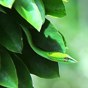 Sembunyi.... by Esyam Din - Animals Reptiles