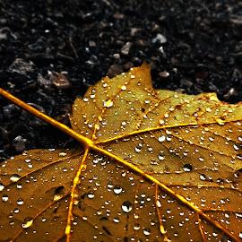 crying by Emina Dedić - Instagram & Mobile Other ( melancholy, orange, home, reflection, asphalt, melancholic, beautiful, beauty, yellow, road, away, macro, autumn, shadow, fall, drops, path, lovely, raindrops, rain drops, dying, rain, , vertical lines, pwc )