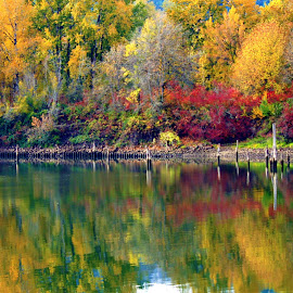 Fall at Sauvie Island, Oregon  by Carol Langsford - Landscapes Waterscapes
